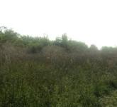 Zeleni Banat - Banatsko Veliko Selo