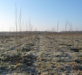 Rasadnik Vikumak šuma na Galadu