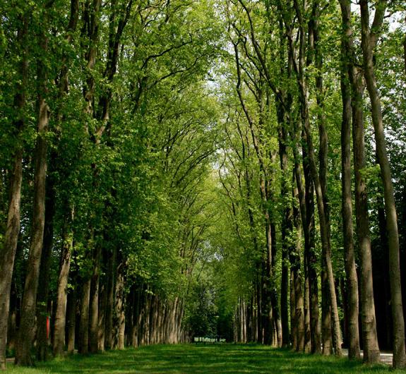 Šumski sadni materijal