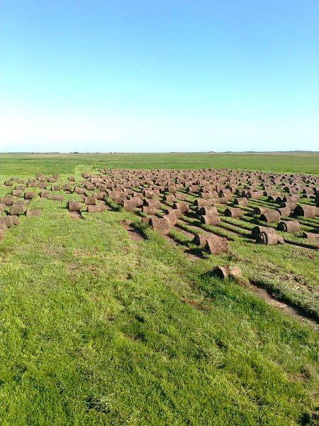 Vikumak šumski rasadnik | o nama, slika polja