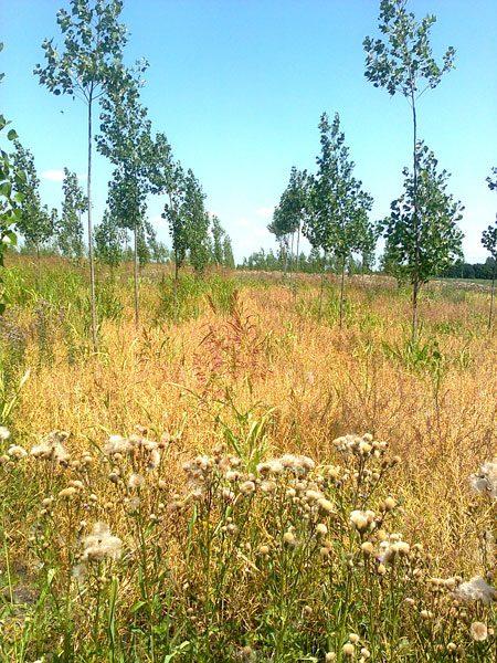 Vikumak šumski rasadnik | o nama, zuto polje