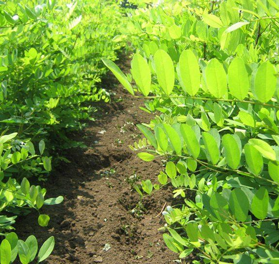 Vikumak šumski rasadnik | o nama, zeleni detalj