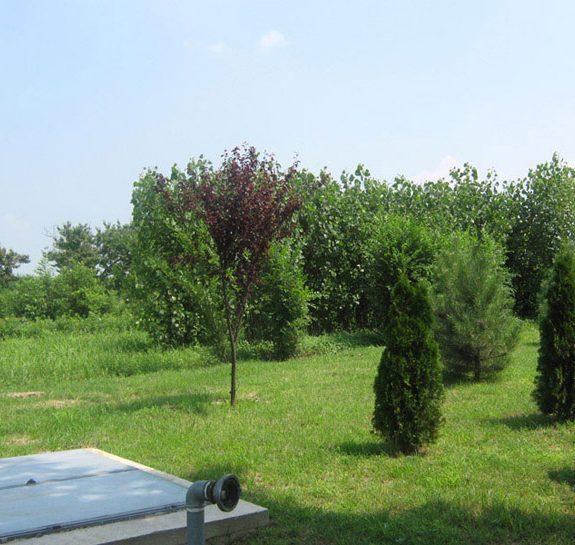Vikumak šumski rasadnik | o nama, zeleni zasad