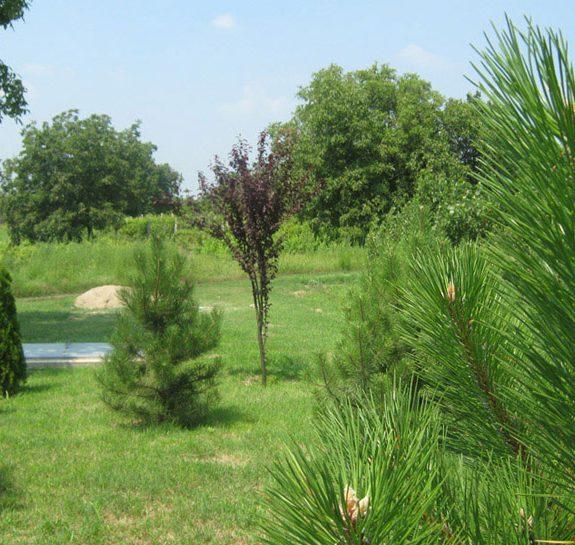 Vikumak šumski rasadnik | o nama, jelke, drvca, zeleno