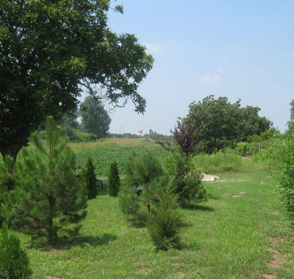 Vikumak šumski rasadnik | o nama, zasad jelki