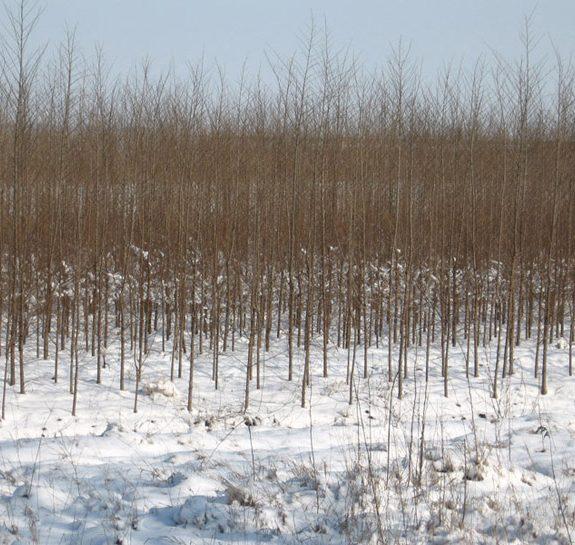 Vikumak šumski rasadnik | o nama, snezni radovi