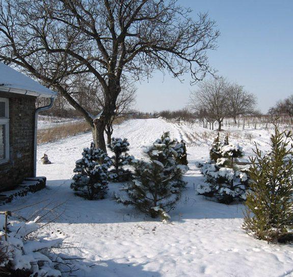 Vikumak šumski rasadnik | o nama, sneg, zasad, jelke